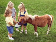 Чи варто дитині купувати поні?