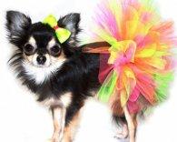 Історія собачої моди. Коли з'явився одяг для собак?
