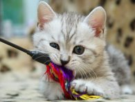 Аксесуари для кошенят