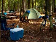 Як навесні вижити в лісі