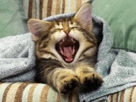 У котика болять зуби. Що робити?