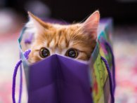 25 цікавих фактів про котів